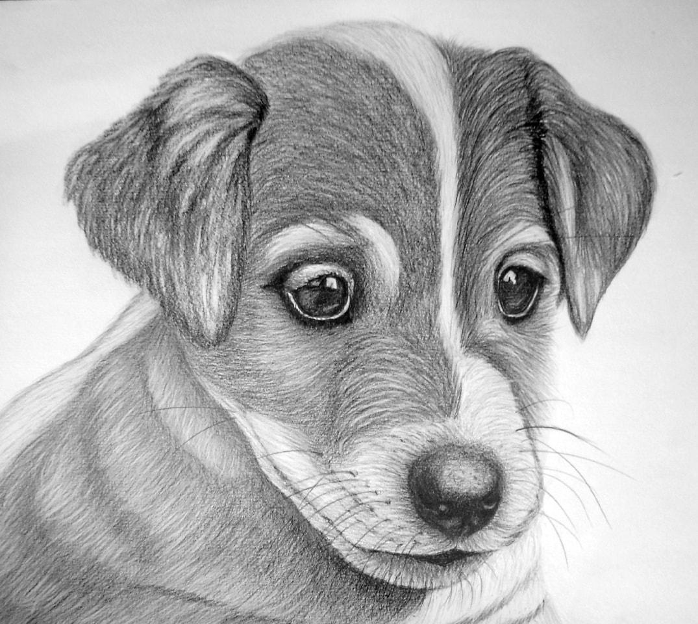 рисование фото карандашом