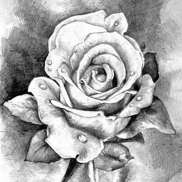 Базовый курс: Рисование карандашом